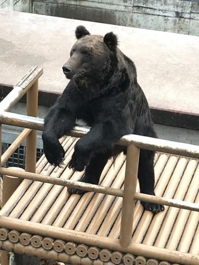 北海道、結果的に動物ばっか見た一人旅3泊4日 day1