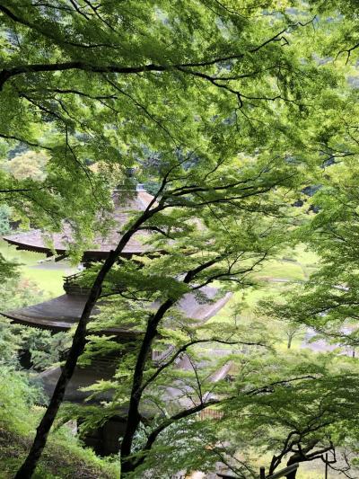 新車でGo舞鶴~ 紅葉まえの金剛院は静寂の緑景に包まれていた。