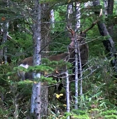 2020 10 Go toお得な予約で その一 知床の道で熊と鹿と狐に遭遇!②
