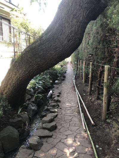 武蔵小金井からはけの道、はけの小路へ