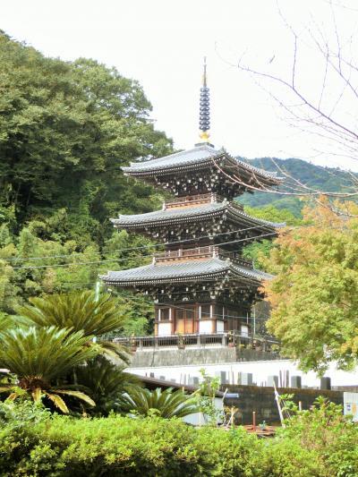 県内旅行で東丹沢へ。③伊勢原日向エリアを巡りました。