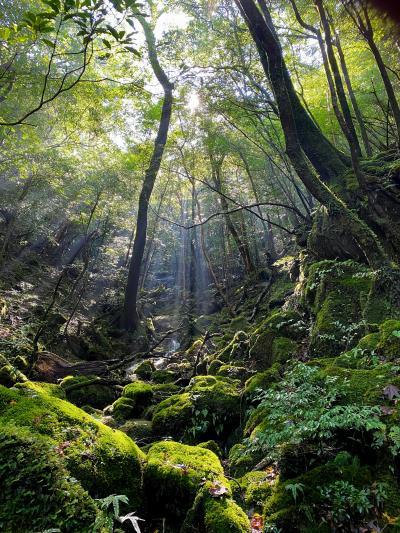 はじめての屋久島ひとり旅 白谷雲水峡(もののけの森)から太鼓岩へトレッキング編 ②