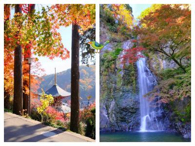 勝尾寺から箕面の滝まで 秋の箕面を満喫♪