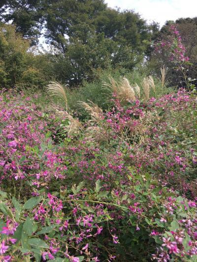 萩の花を見に神代植物園へお散歩