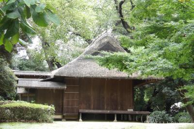 東博の日本庭園-2020年秋