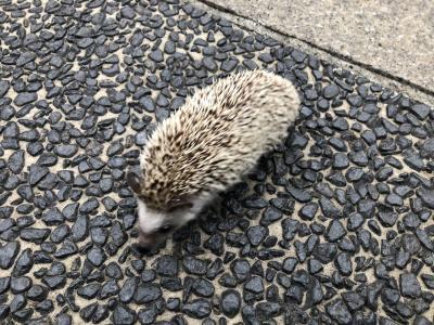 横浜にはハリネズミが散歩?と牡蠣のフルコースランチ堪能の ベイエリア