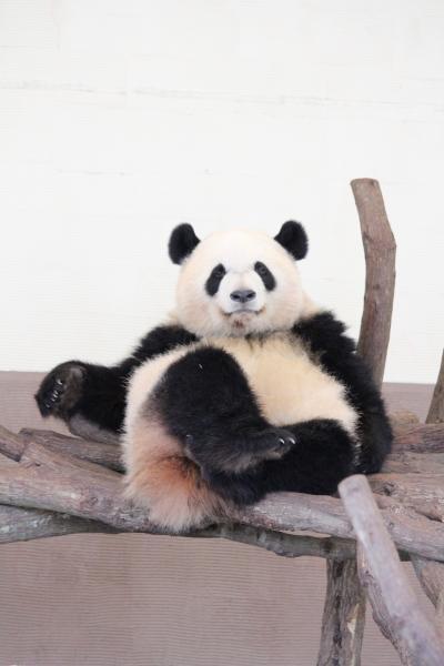 パンダを見る旅in和歌山 2日目