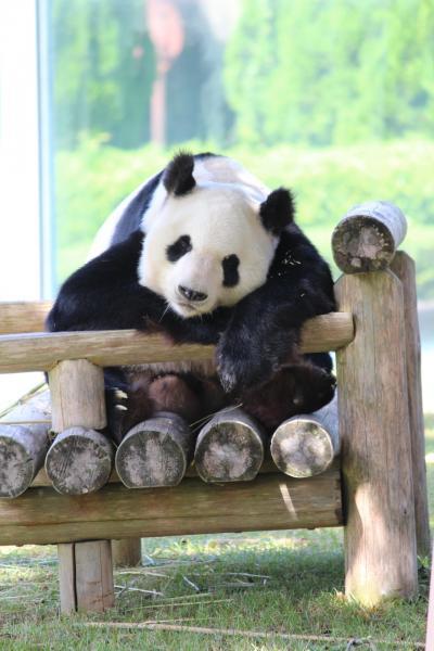 パンダを見る旅in和歌山 3日目