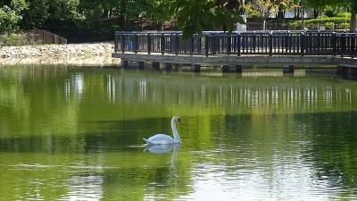 昆陽池公園の散歩に出掛けました その5。
