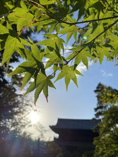 紅葉前のズラシ旅!今こそ外国人の居ない静かな京都へ行こう♪♪嵐山から哲学の道へ。。。