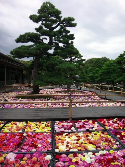 Go to にのって、日本の果てまで行ってやるぅ 2. 松江、出雲大社、日御碕灯台 (島根県)