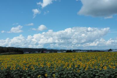 ワーケーションにトライ!暮らすように旅した秋の美瑛&富良野〈2〉始まりはゆるゆるバケーション♪