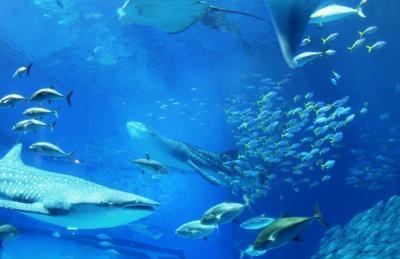 """本部_Motobu 美ら海!ジンベエザメが泳ぐ""""黒潮の海""""と、昔ながらの沖縄そば"""