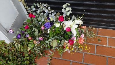 久し振りに、西武庫公園に咲く花を見せて貰いに行きました その01。