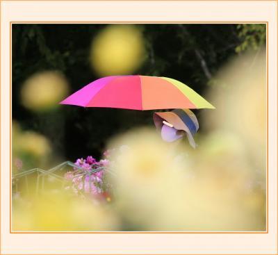 Solitary Journey[2037]満開♪華麗なダリアの魅力を再発見<標高500m世羅高原農場・ダリアとガーデンマム祭>広島県世羅町