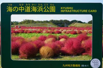 20201015-2 福岡 海の中道海浜公園のはなまつり 其の一は花の丘のコキア