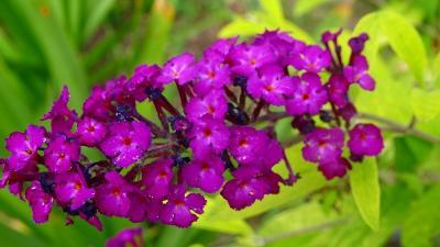 久し振りに、西武庫公園に咲く花を見せて貰いに行きました その03。