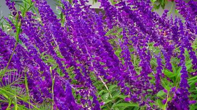 久し振りに、西武庫公園に咲く花を見せて貰いに行きました その04。