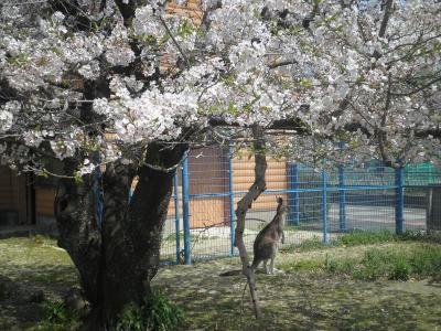 動物とふれあえる! 大牟田市動物園とレストランだいふくでランチ