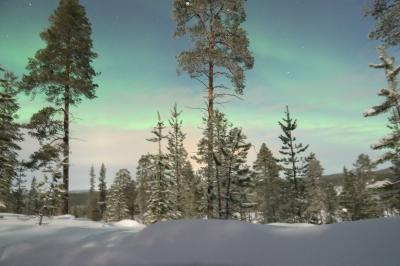 スウェーデン、フィンランド旅行(フィンランド サーリセルカ編)