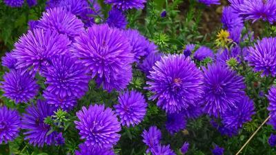 久し振りに、西武庫公園に咲く花を見せて貰いに行きました その06。