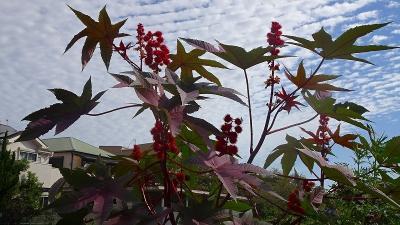 久し振りに、西武庫公園に咲く花を見せて貰いに行きました その08。