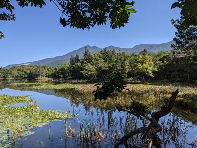 知床五湖と野生熊、幻の寿司屋を訪ねる旅