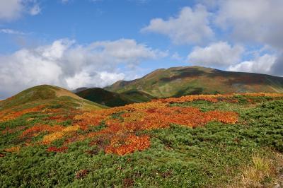 東北山岳紅葉 ①月山 「カエデ?のお花畑?」