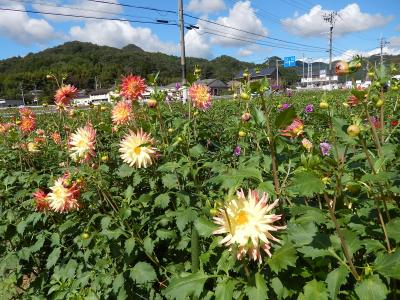 天気の良い日は花を見に♪