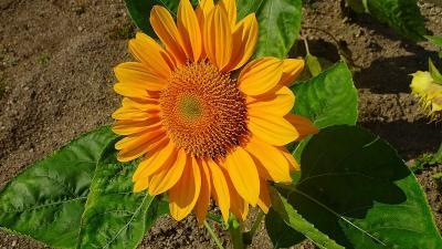 久し振りに、西武庫公園に咲く花を見せて貰いに行きました その11。