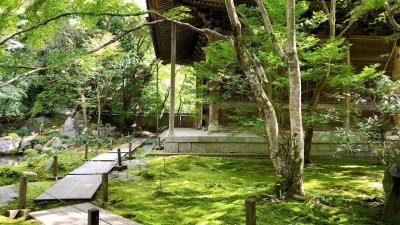 ずっとここに居たいなぁ~蓮華寺にて贅沢な時間に出会いました。