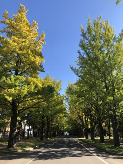 GO TOトラベルで札幌へ♪少し早めの紅葉
