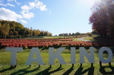 *秋の「滝野すずらん丘陵公園」にてコキア鑑賞など♪