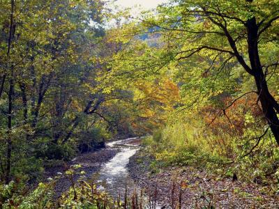 Autumn in Na2gashi