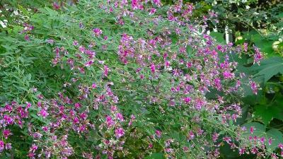 久し振りの笹原公園の花壇 その1。