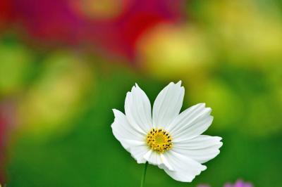 """「木曽三川公園センター」""""秋の花物語""""を開催します。"""