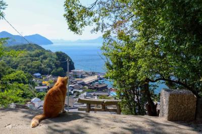 Goto香川!離島とくいだおれのひとり旅 2日目前編【男木島】