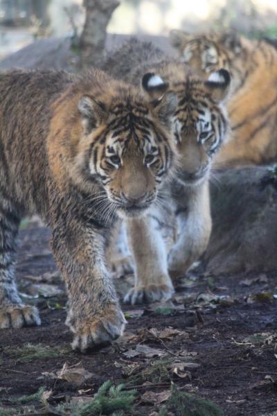 紅葉の旭山動物園
