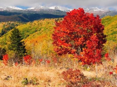 登山は諦め~三段紅葉~満喫ハイキング