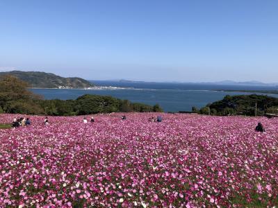 コスモスを見に能古島へ。