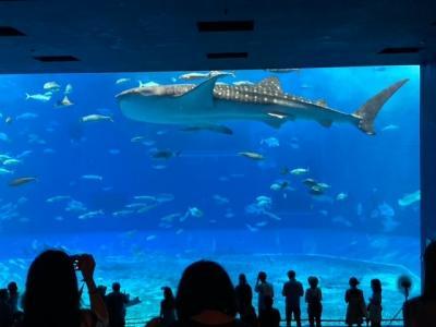 202010沖縄 Day1-2 美ら海水族館(26年ぶり2回目)からハレクラニへ