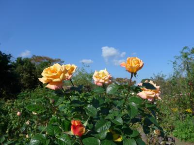 1000種類のバラが咲く大神ファームを訪れました💛(^0^)💛!!