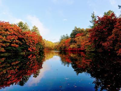 1泊2日軽井沢の紅葉巡り 星野の森、雲場池、風のガーデン。宿泊はバーモラル軽井沢