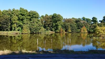 秋晴れの水元公園散歩