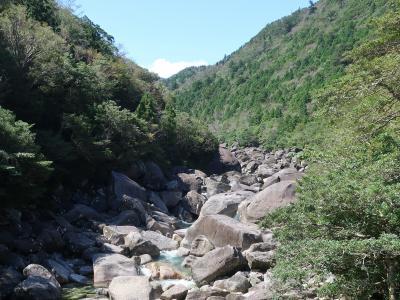 太古の森 屋久島3泊4日 ②縄文杉の森を訪ねて