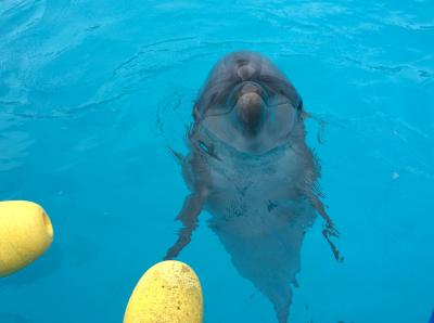 Go to 高知 室戸岬で「イルカの日」~chikiはファーとビーに会いにきた