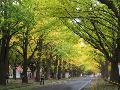 札幌の黄葉・北海道大学 ~ 2020