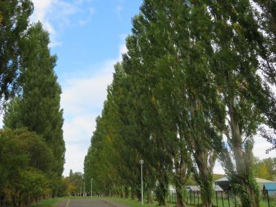 北海道大学構内散歩 ~ 平成ポプラ並木と、西側辺り ~ 2020