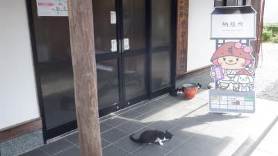 2020年9月守ろう心身の健康!四国リンリン時々テクテク遍路(5)住民・寺猫が愛す徳島市内を巡る
