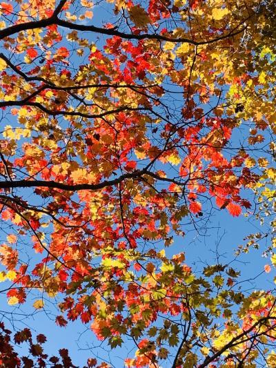 ☆Go to drive☆  赤 黄 緑 榛名の秋は何色に染まる?